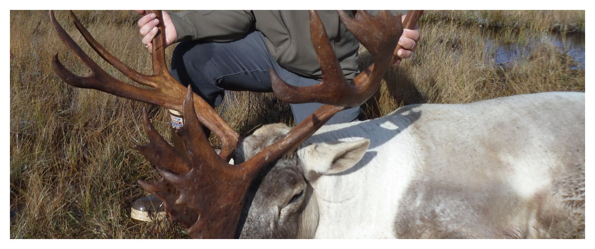 Newfoundland Big Game Hunting — When, Where We Hunt & What